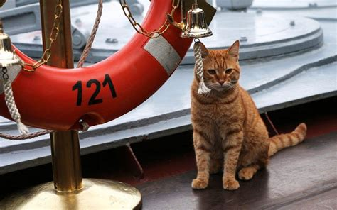 Russian navy celebrates first cat to travel on a long